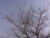 060321tree2